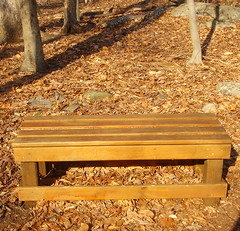 bench among the leaves