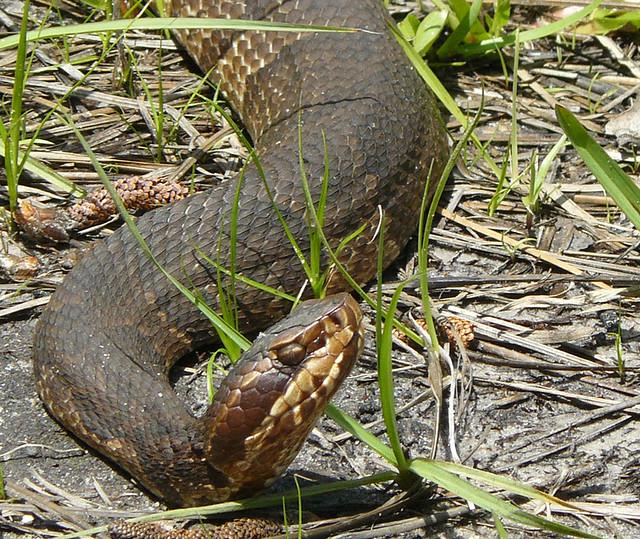 South Carolina Amp Snakes Hamster Dreams