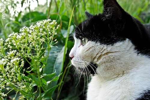 Entrain de regarder le jardin / Looking at the garden