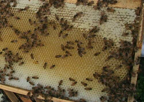 Honey Combs