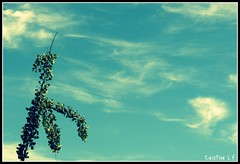 Tree man is in love with the sky.