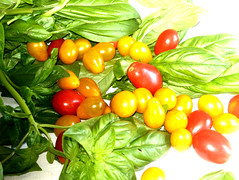 Pomodori basilico e photoshop il blog della fattoria for Planimetrie della fattoria contemporanea