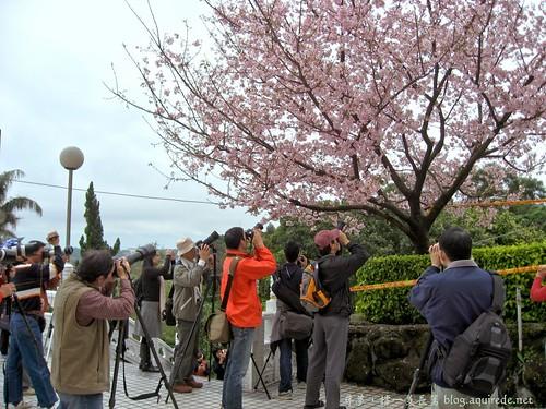 2009年3月淡水無極天元宮賞櫻_1696