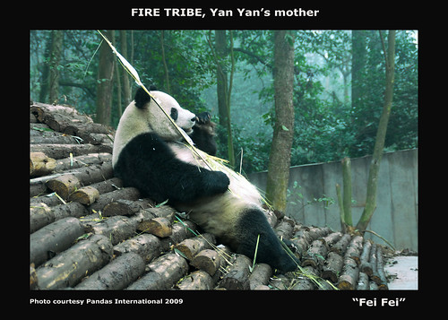 FEI FEI..this is our FIRE TRIBE baby's mother