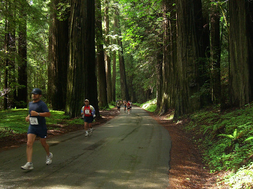Runners in the Avenue of the Giants Marathon