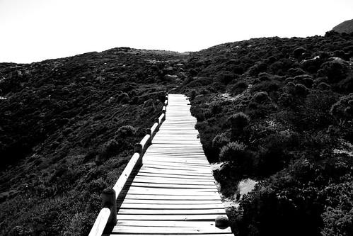 Bridge to Hope?