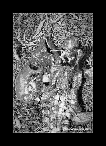 "Muerte en el Campo • <a style=""font-size:0.8em;"" href=""http://www.flickr.com/photos/20681585@N05/3425766058/"" target=""_blank"">View on Flickr</a>"