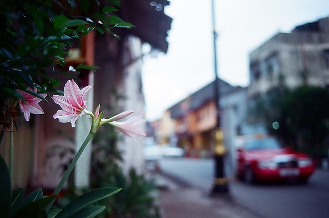 Flowers in chinatown (22430030)