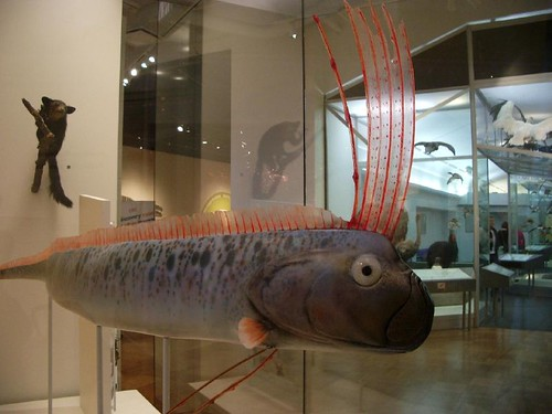 A crested oarfish. Not to be eaten with chips.