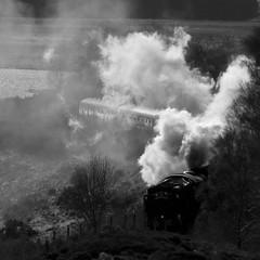 Backlit Steam