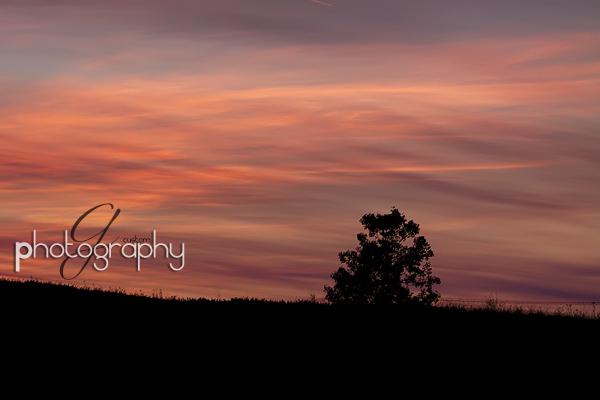 Bluebonnet field at sunset