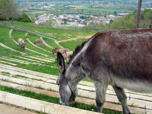 Donkeys at the ampitheatre near