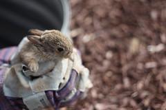 Baby Bunny Rescue #2