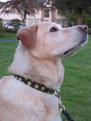 Dog's new collar