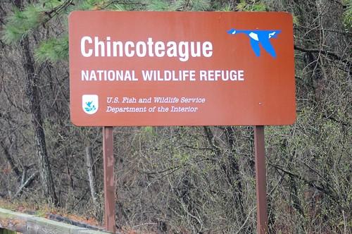 Chincoteague NWR