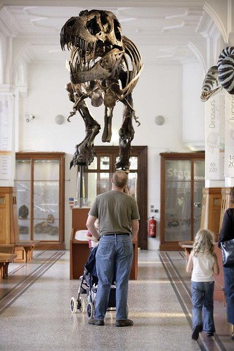 Stan the T. rex