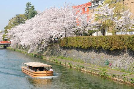 琵琶湖疏水‧吉野櫻