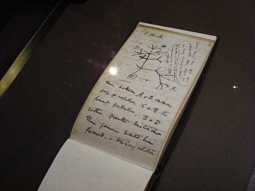 Darwin Exhibition @ Gulbenkian by jcraveiro, on Flickr