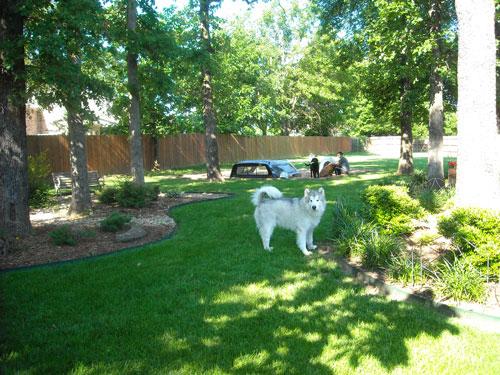 See how far my yard goes back.   Dog heaven.