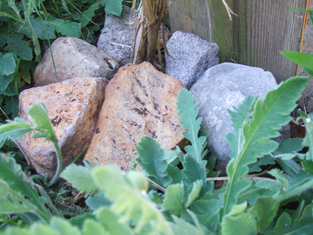 "Rockpile on clematis ""feet"" to cool it off"