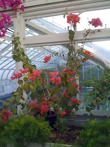 Greenhouse Visit 13/09
