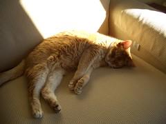 Kooky Bear in the sun