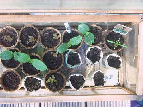 Anke's seedlings