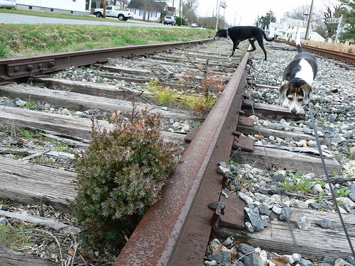 Hertford - Jimmie and Henry on Old Railroad