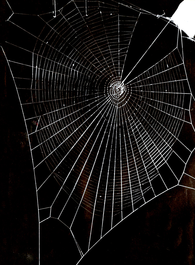 Typical Spider Web