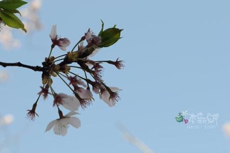 花瓣飄落的瞬間