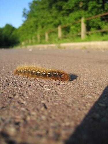 Caterpillar!
