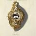 015-Nido del Pajaro Moscón-Colección de nidos de aves 1772