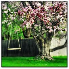 The Peaceful Tree