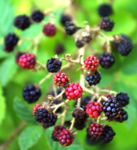 blackberries, pentax k10d