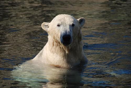 Lloyd im Zoo am Meer in Bremerhaven