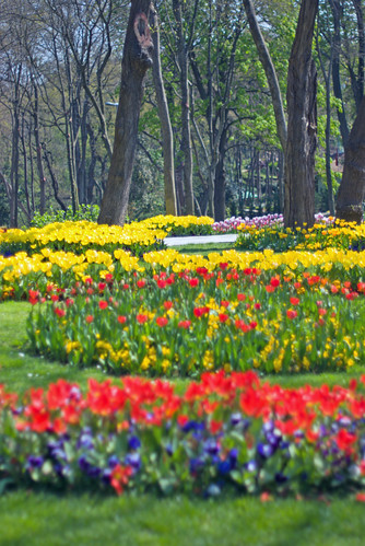 tulips, istanbul tulip festival, istanbul, pentax k10d
