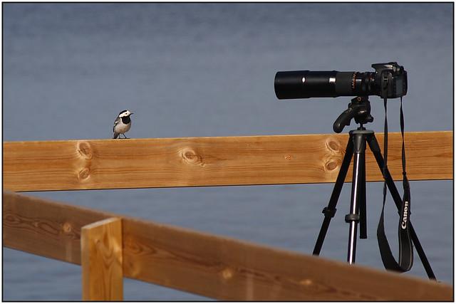 Bird badmouthing my 400mm lens