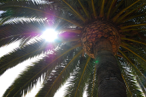 sun in a palm