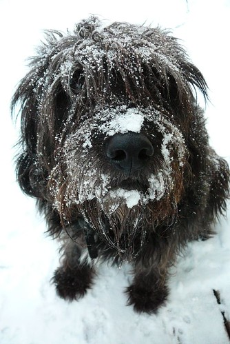 All nose and snow