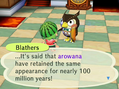 Blathers was very impressed with my Arowana!