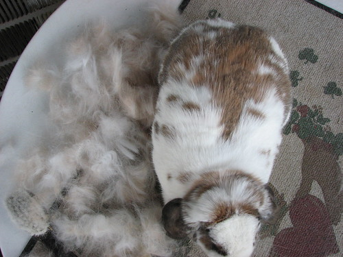 betsy and her pile of fur from above