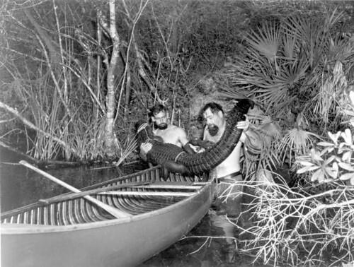 Alton Smith and Al Zaebst loading a captured alligator into their canoe: Weeki Wachee River, Florida