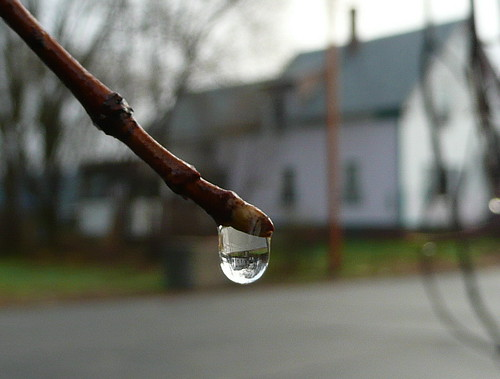 The whole world in a drop of water