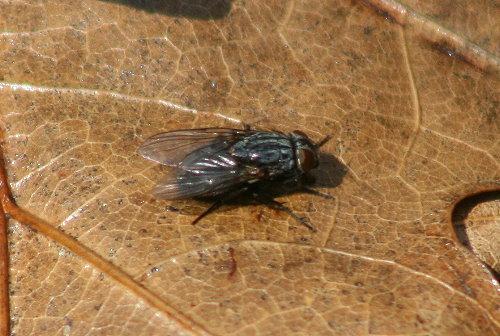 spring fly