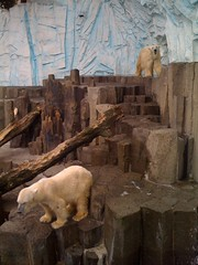 Polar Bears, Ueno Zoo