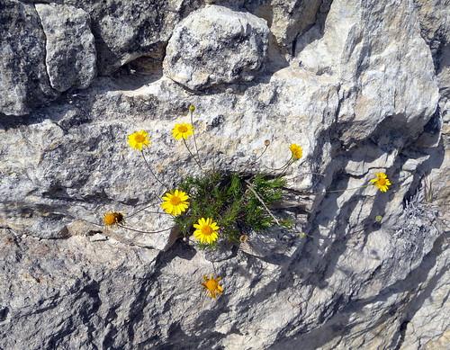 Tough little flowers
