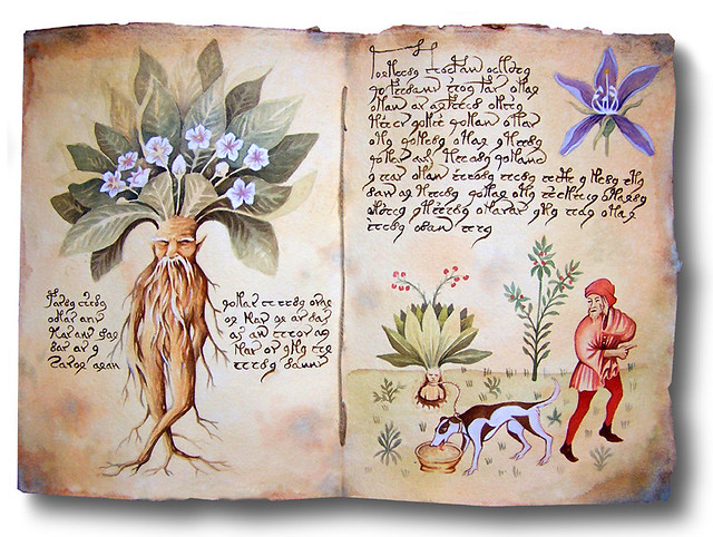 Mandragora autumnalis double page