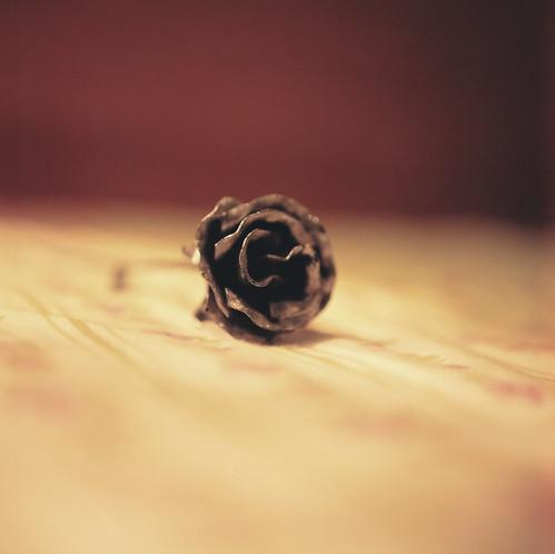 布拉格的玫瑰. Rose from Praha