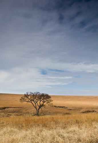 Tallgrass Prairie by you.