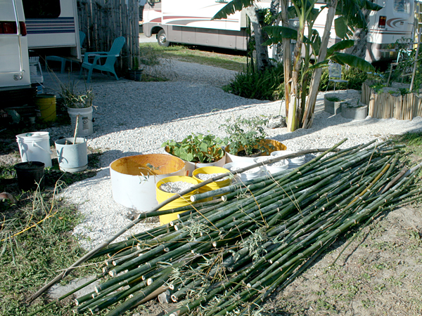 Finished-Thin-Bamboo